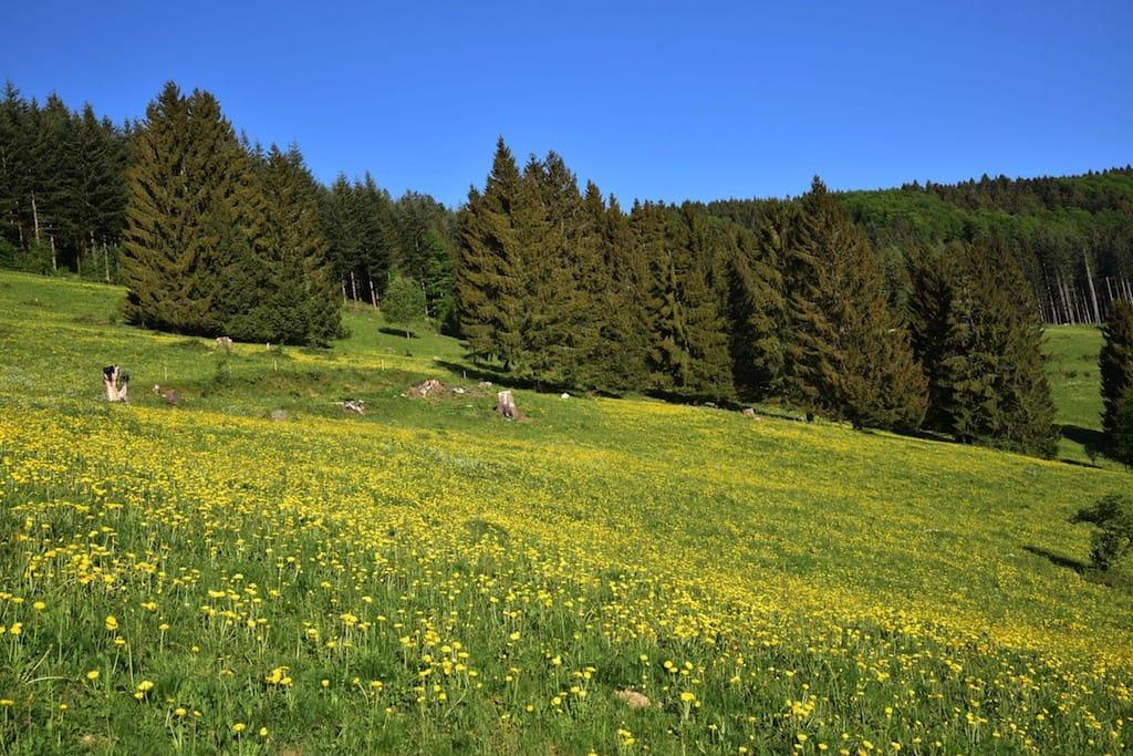 Frühling im Bergland